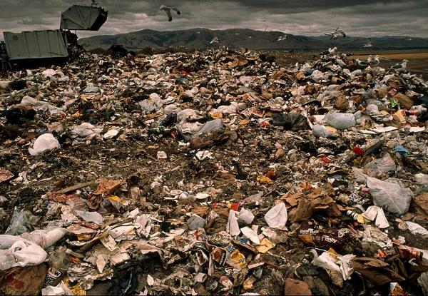 Delitti ambientali