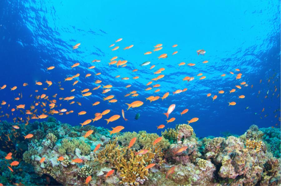 inquinamento oceano