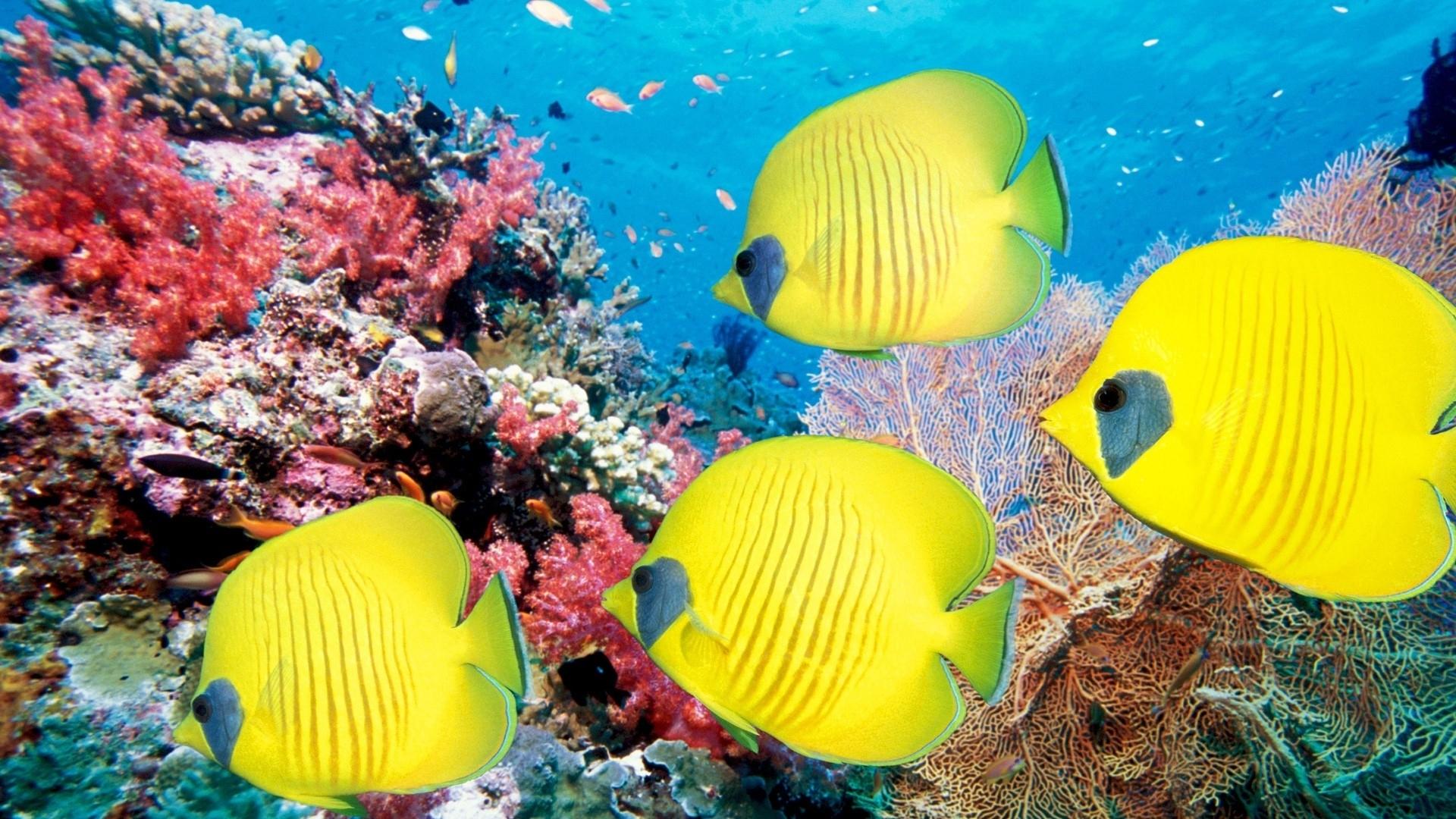 Caraibi la barriera corallina in pericolo corretta informazione - Percentuale di umidita in casa ...
