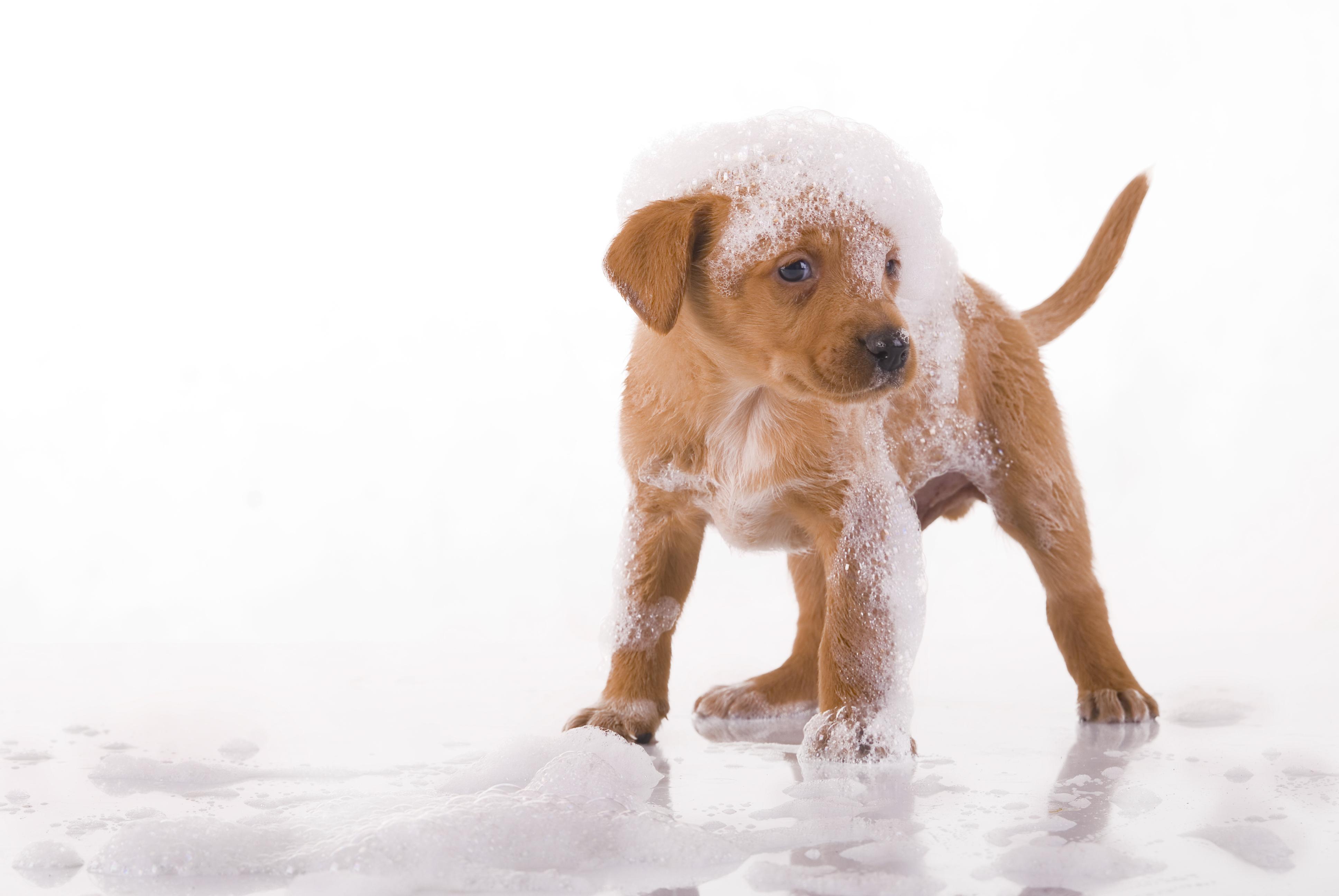 toelettatura cani milano: offerte e prezzi a domicilio o self