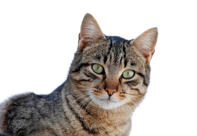 Nomi Per Gatti Maschi Originali Simpatici E Divertenti Le Idee