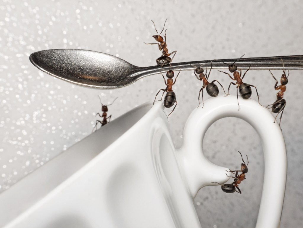 Rimedi naturali contro le formiche in casa cucina o - Come eliminare le formiche in casa ...