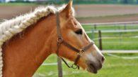 Cavalli frasi