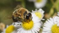 Sognare api significato